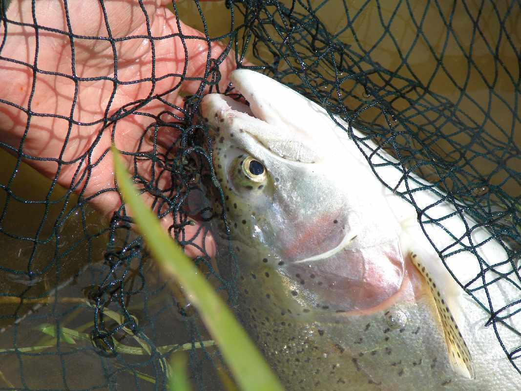 Brook Farm Trout Fishery
