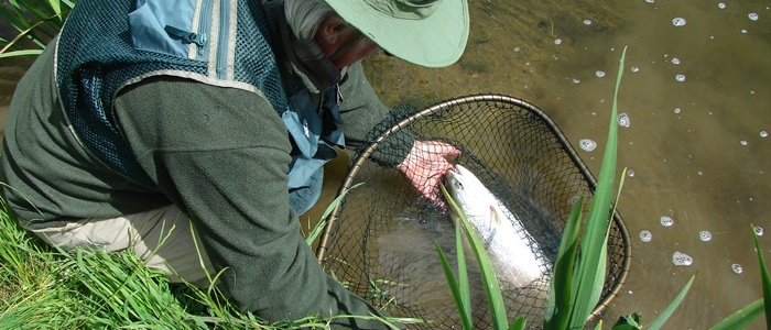 Brook Farm Fishery