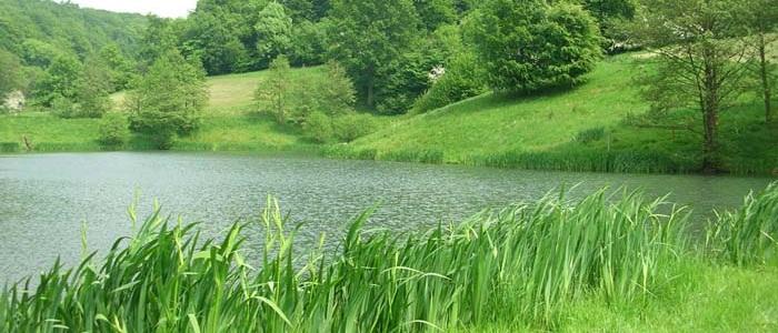 Brook Farm - Lake view