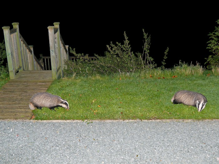 The badgers at Brook Farm / Lakeside Cottage